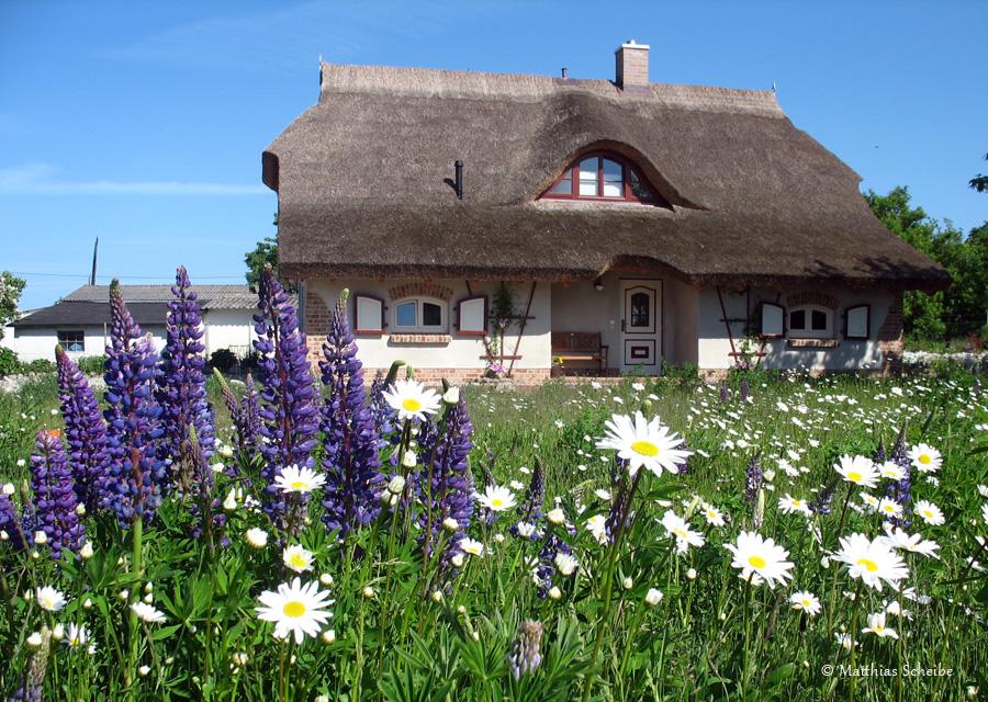 Ferienhaus for Sellin ferienhaus